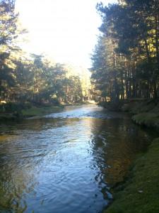 Rio Duero en Covaleda