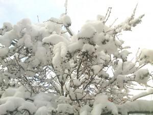 Nieve en Pinares Soria