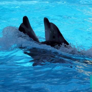 Los seres del agua: los defines